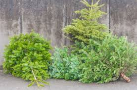 sapin recyclage