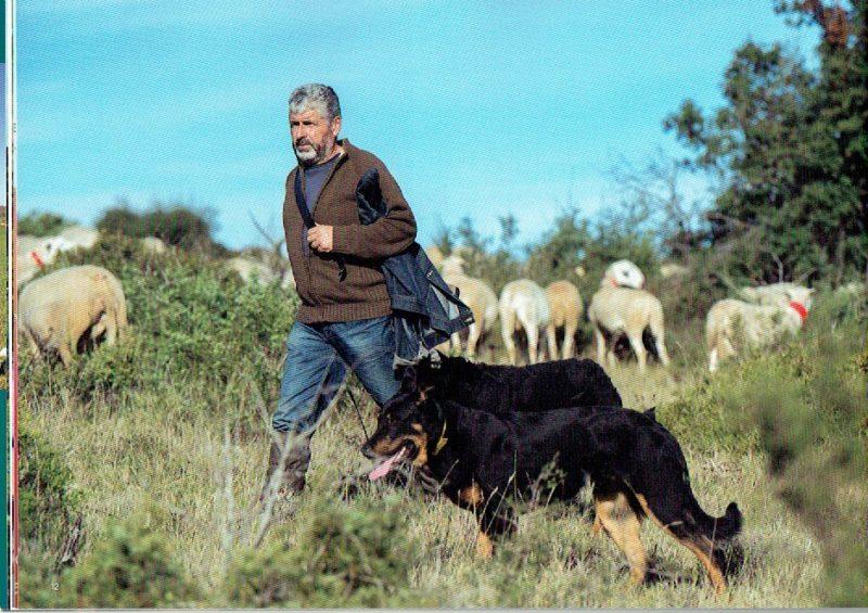 pastoralisme-12
