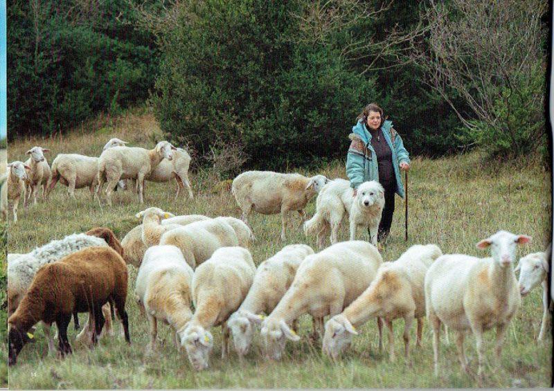 pastoralisme-14