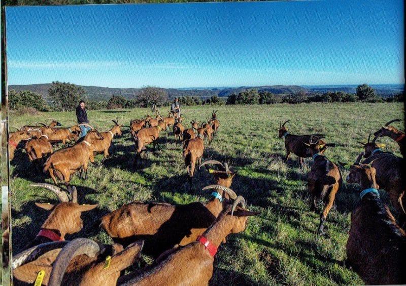 pastoralisme-18
