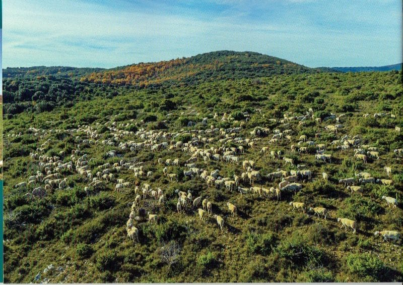 pastoralisme-4